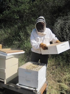beekeeping day with mom 014